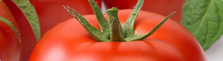 indeterminate tomatoes banner